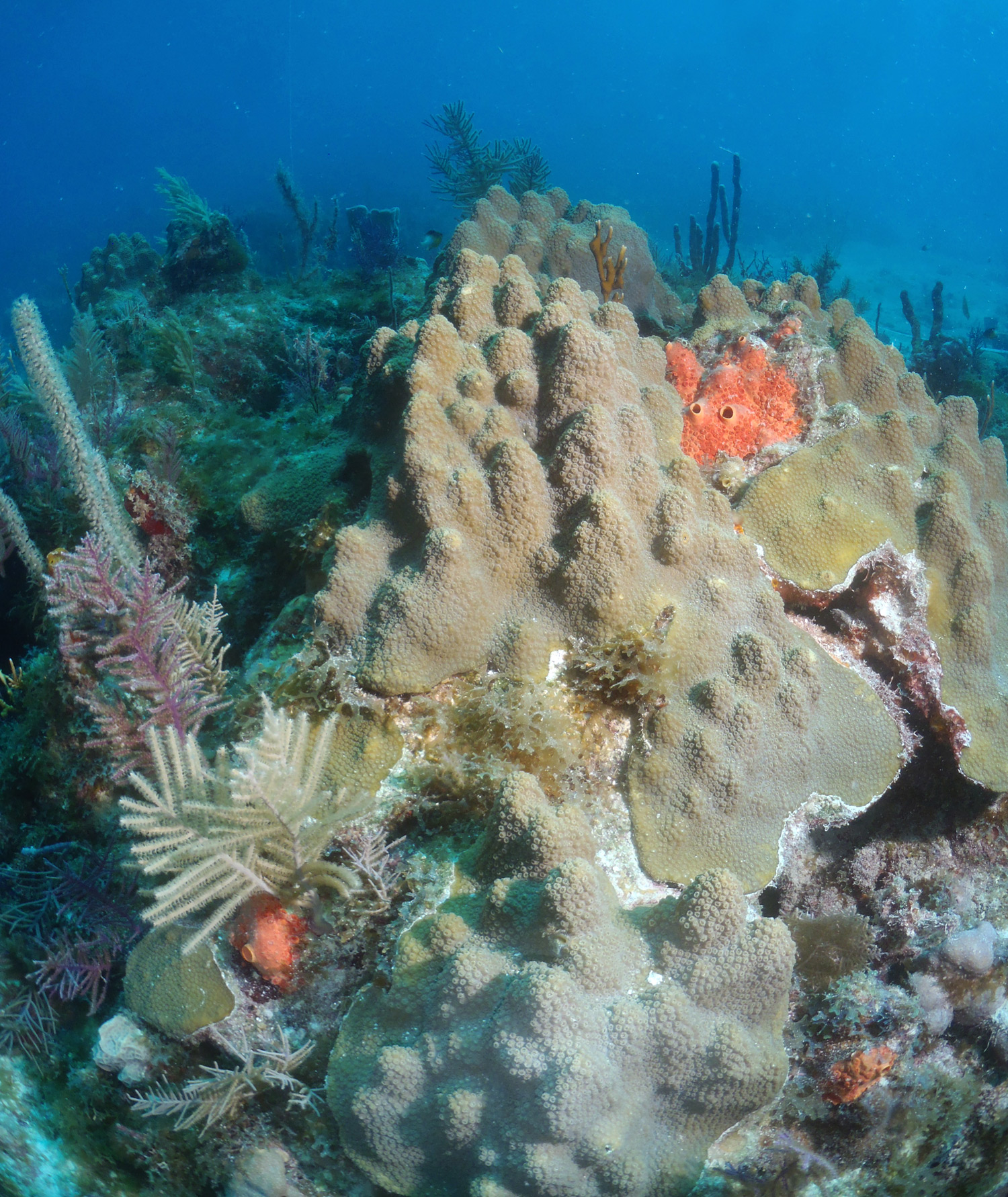 Protect Florida Keys Corals And The Coral Reef Ecosystem?