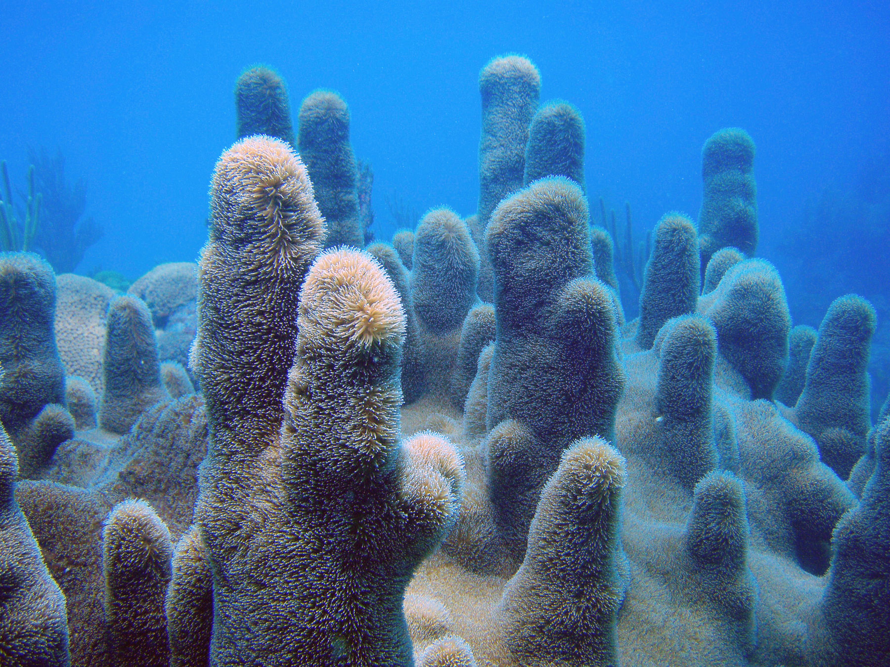 Protect Florida Keys Corals And The Coral Reef Ecosystem
