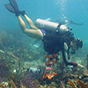 Photo of SCUBA diver running a transect line for a benthic survey.