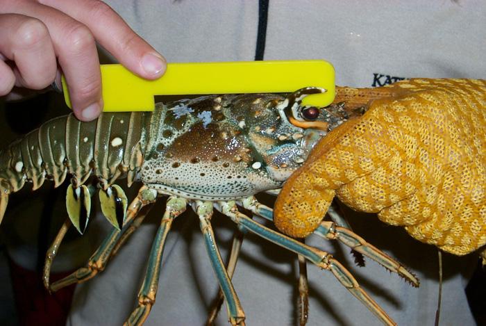 Be Prepared for Lobster Season!