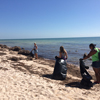 Photo of Margaritaville volunteers combing the beach for trash.