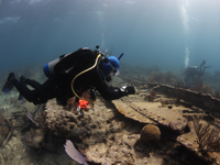 To determine the ship's true identity, trained divers map parts of the wreck and compare those details with historical archives of ships lost at Elbow Reef in the early 1900s.
