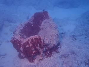 Abraded sponges