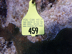 tag with contact information attached to a piece of coral
