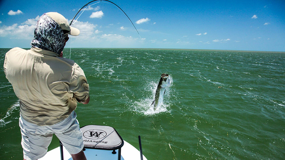 view from behind of a man reeling in a tarpon