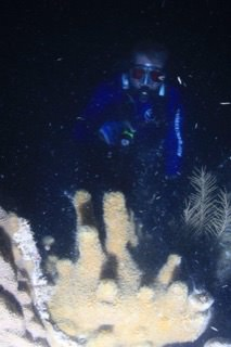diver identifying coral