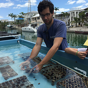 scientist handeling coral fragments in a water tank