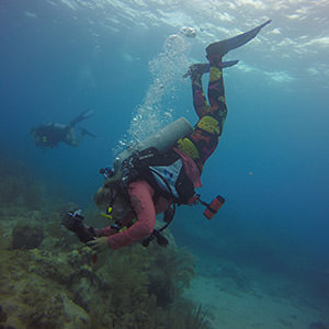 diver swimming down to examine a coral reef