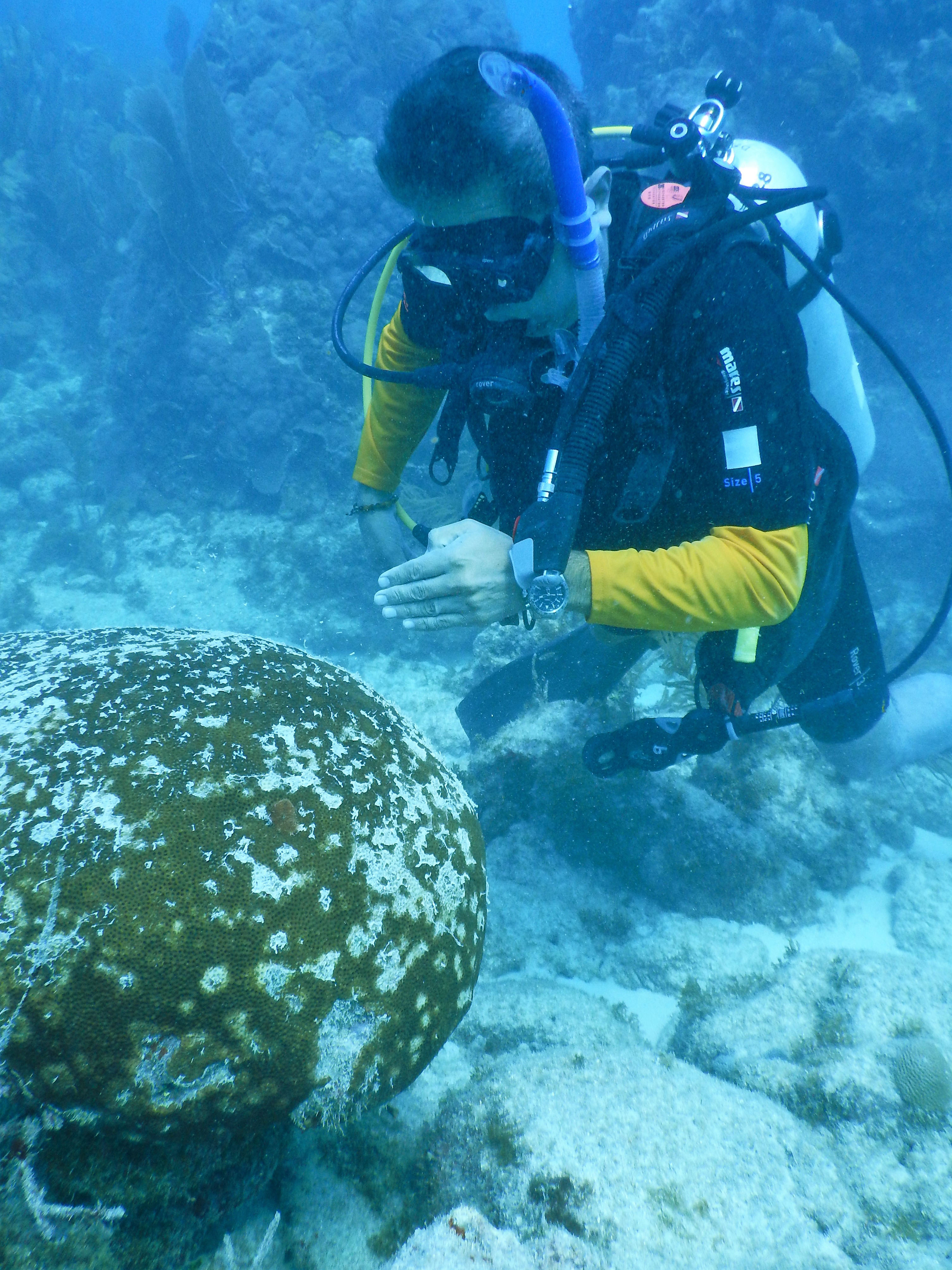 Marine Study Examines Stress Brain >> Photos And Videos Florida Reef Tract Coral Disease Outbreak