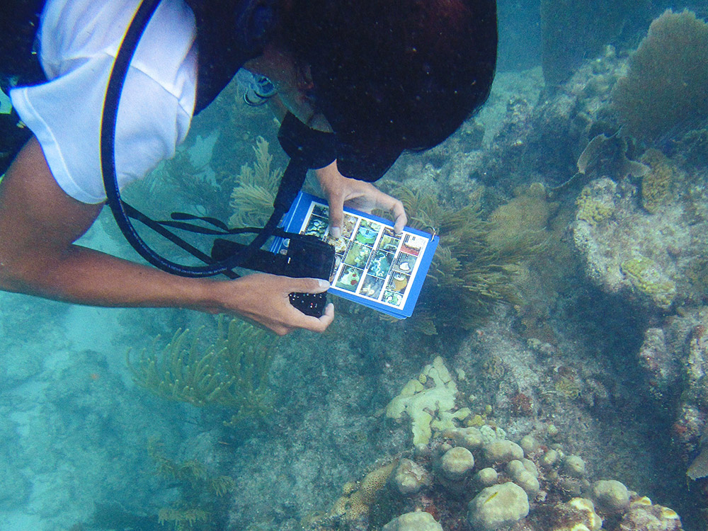 Diver using Disease Identification Cards to identify deseased coral