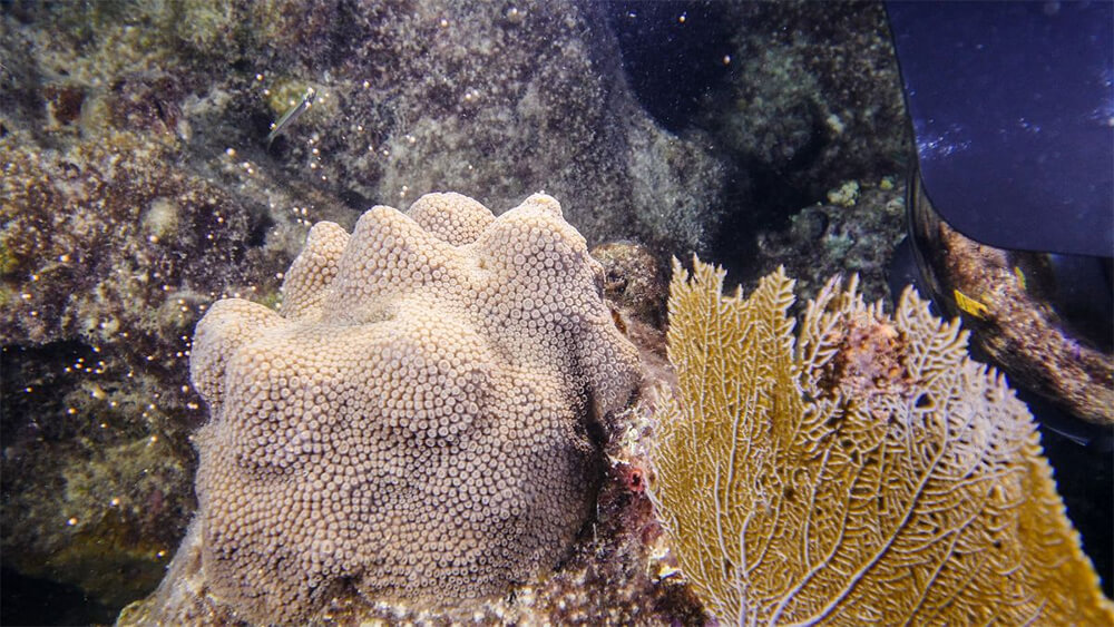 corals on the seafloor