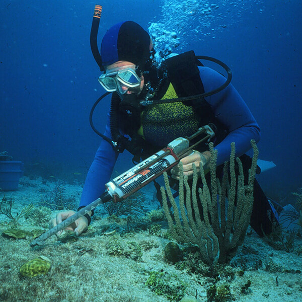 A diver takes samples while holding a tool in their hand